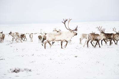 星空シアター クリスマスコンサート フローデ・フェルハイム&ヒルデグン・オイセット画像