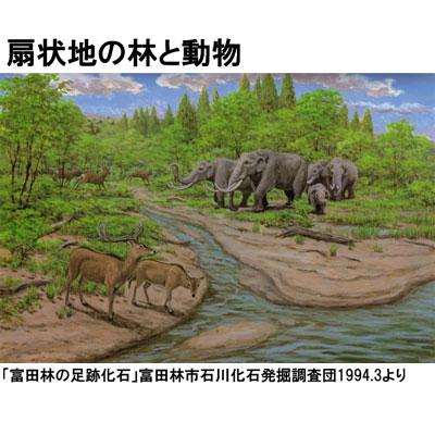 100万年前の古代ゾウ(アケボノゾウ)全身骨格標本の展示画像